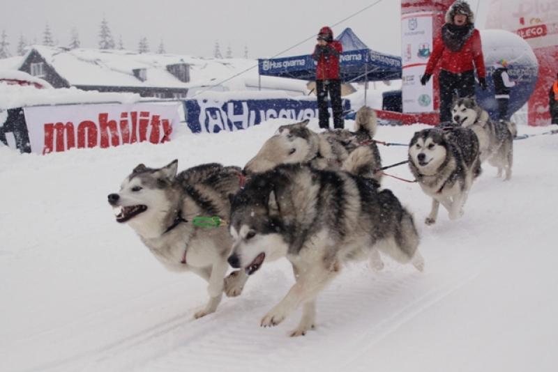 Nasz patronat: VII Husqvarna Tour 2013 – rekordowe wyścigi psich zaprzęgów!