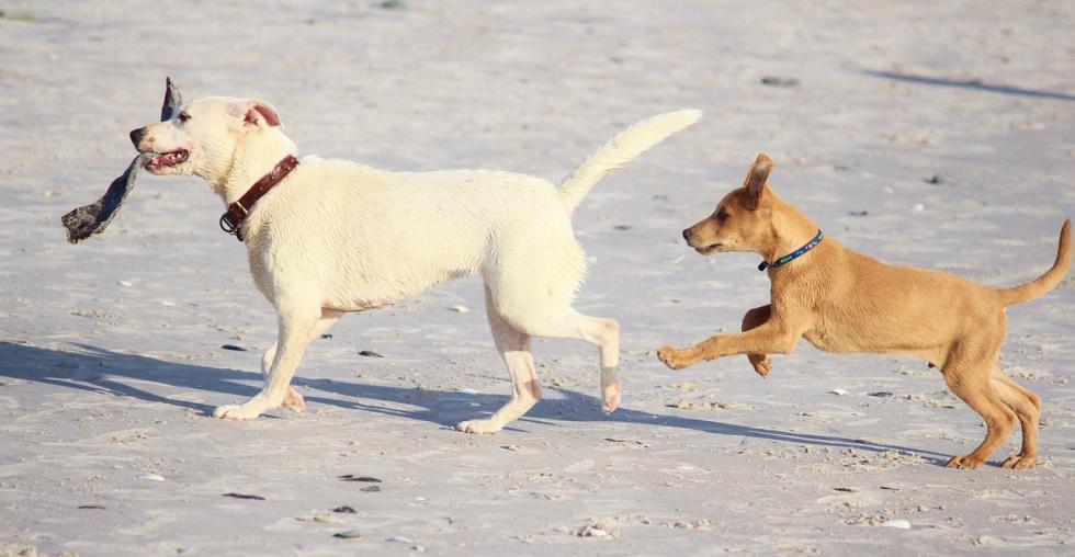 Żywienie psa – inne na każdym etapie życia?