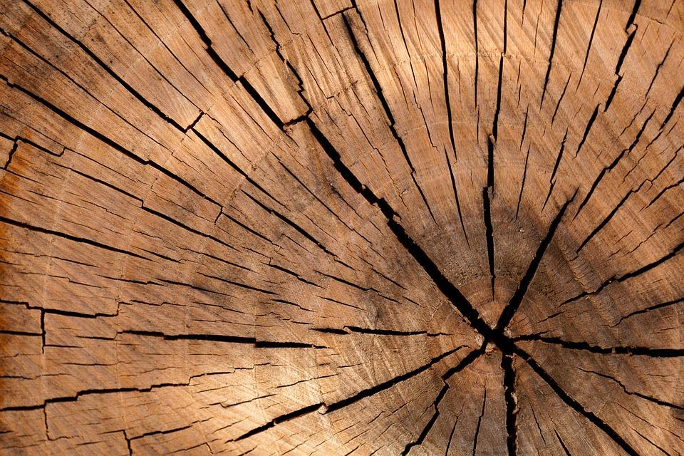 Wybór właściwego drewna