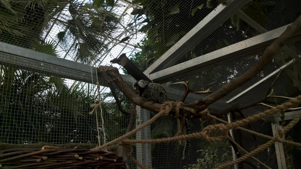 Egzotyczne małpki zapraszają dolegnickiej palmiarni