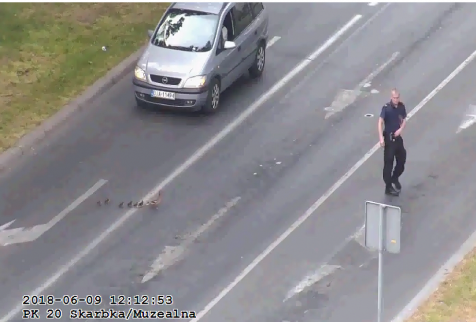 Strażnicy miejscy znowu uratowali kaczki
