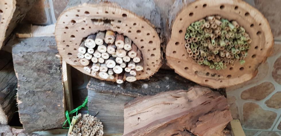 Przyjdź wniedzielę domini-zoo izbuduj domek dla owadów
