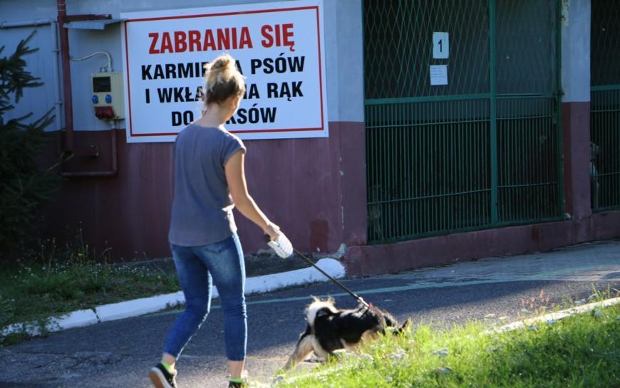 Miasto dba obezdomne zwierzęta - ile wydano na ten cel