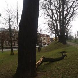 Wiało nad Legnicą. Uszkodzona sygnalizacja, połamane drzewa