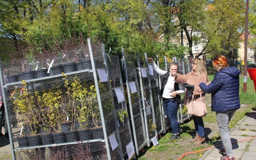 Legnicka odnowa zieleni miejskiej wzorcem dla innych