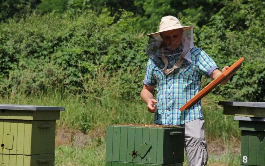 Legnica przyjazna pszczołom. Powstaje sieć pasiek miejskich