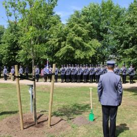 Dęby Pamięci pomordowanych policjantów