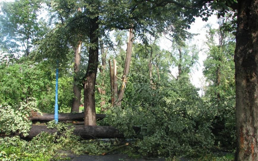 Galeria wprowadza sztukę doparku. 10 lat po pamiętnym huraganie