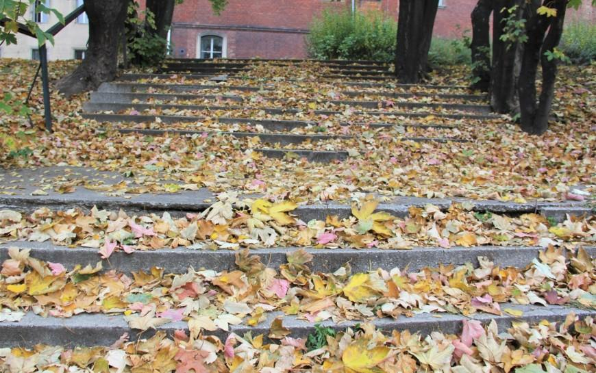 Możemy bezpłatnie pozbyć się liści. Wponiedziałek rozpoczyna się ich zbiórka