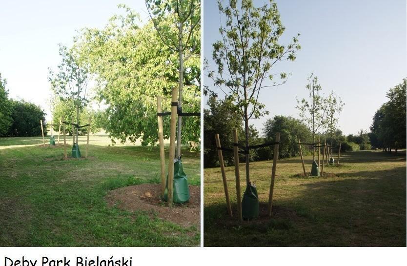 Dobry sposób na ochronę drzew przed suszą
