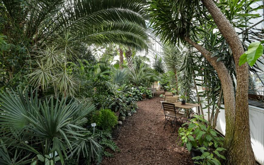 Unikatowa legnicka palmiarnia czeka na renowatorów