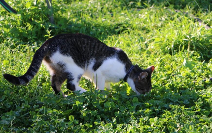 Rozpoczęła się akcja sterylizacji kotów wolno żyjących wnaszym mieście